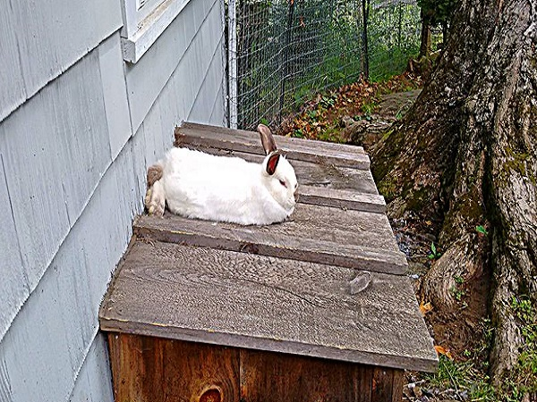 rabbitHouse