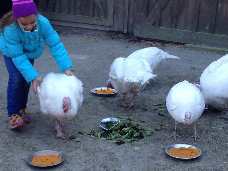 The turkeys enjoy the pies