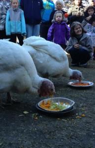Gentle Thanksgiving