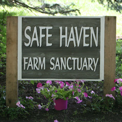 Donate to Safe Haven
