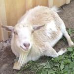 Daisy by the barn
