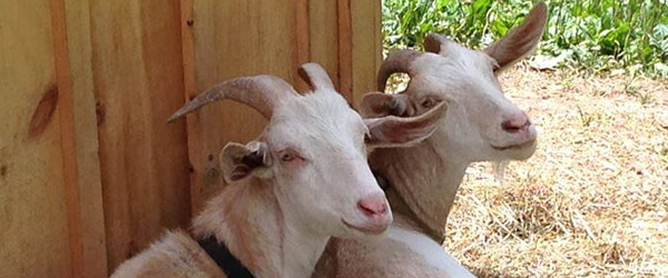 Bessie and Milo