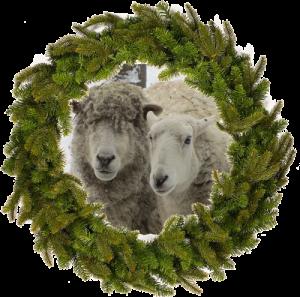wreathsheep500