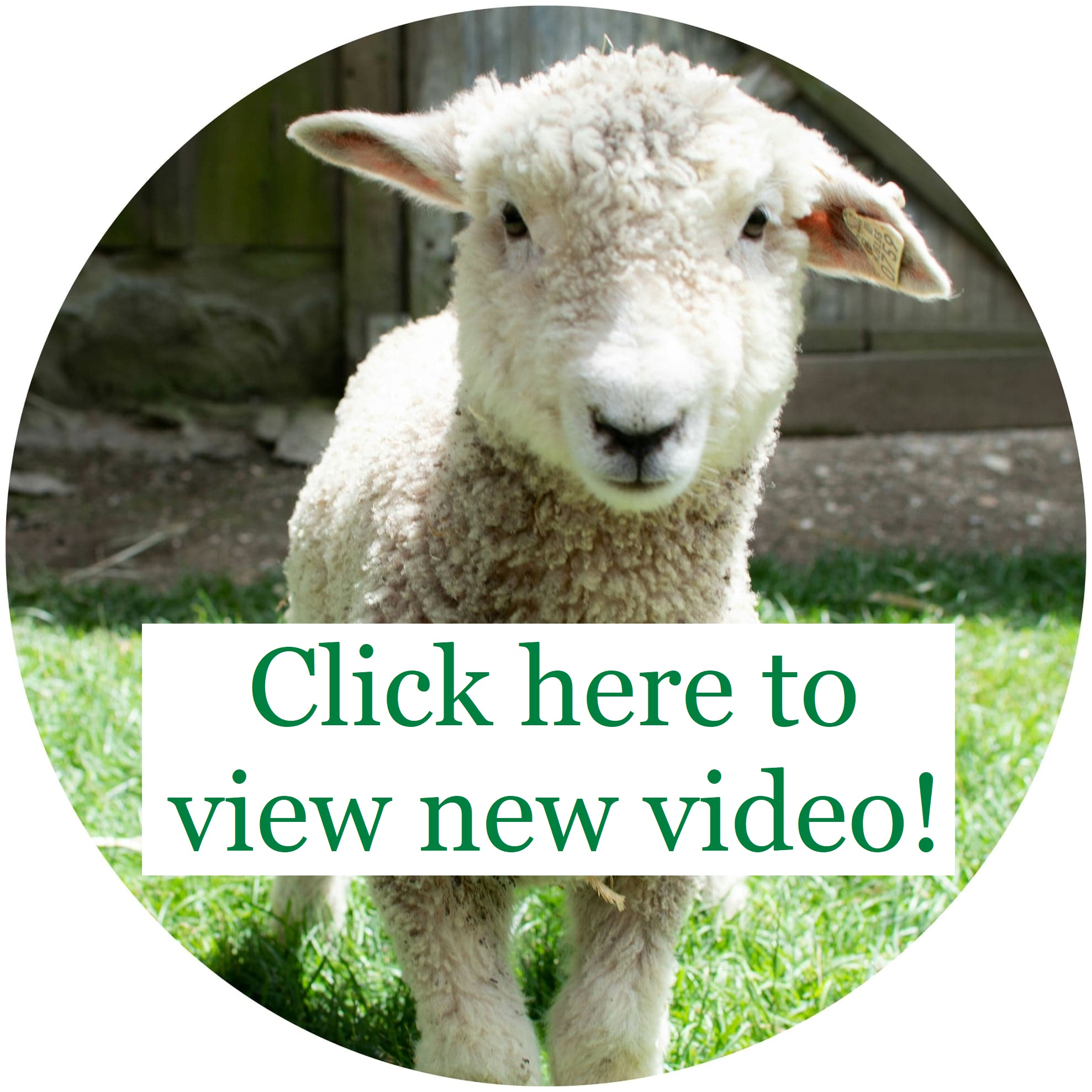 Safe Haven Farm Sanctuary – Dedicated to compassion toward